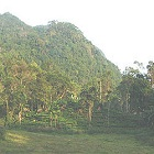 World heritage site Sinharaja Forest Reserve is an important forest in this ecoregion