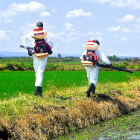 Spraying insecticide to kill mosquito larvae in Kenya