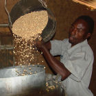Storing maize in metal silos
