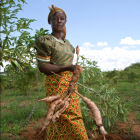 Sweet potato farmer in Africa