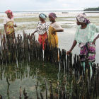 African shellfish farmers