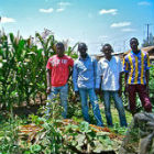 The organic farm of Kibera