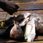 Tilapia for sale in Africa