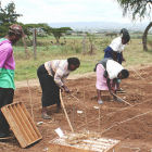 Field workers sowing wheat in Uganda