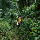 A man walks in a Ugandan forest