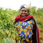 Woman and crops on dryland Kenya