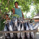 Woman selling tuna