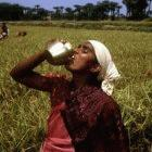 Indian farmer drinking water