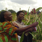 Agricultural researchers in Kenya