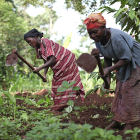 Women farming in Uganda