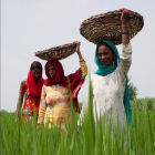 Women farming