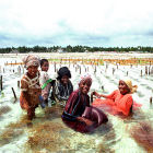 Women farming seaweed in Zanzibar