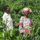 Women farmers with coffee trees, Rwanda