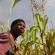 A farmer in a maize field in Malawi