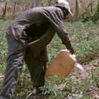 Zambian farmer
