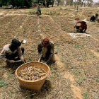 Farming, Mali