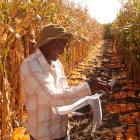 Maize researcher