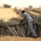 Building barriers to stop dunes advancing in Niger