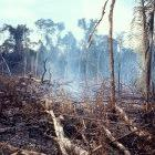 Fire is used for forest and land clearing to create cattle pasture