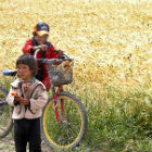 Chinese children with bicycles by a wheat field