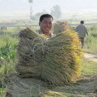 Chinese farmer, with a bale of hay