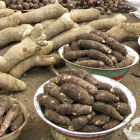 Cocoyam and yam in a market