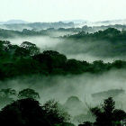 The Congo rainforest