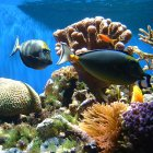 Coral reef with tropical fish