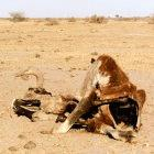 Africans are suffering long periods of drought