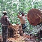 Deforestation in Central Africa