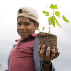 A Bolivian farmer holds a seedling