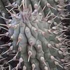Thorny problem: sharing the benefits of research on plants such as <i>Hoodia</i> remains controversial