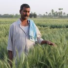 Indian maize farmer
