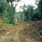 A logging road in Kalimantan, Indonesia