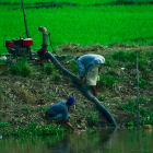 Farmers set up water pump for irrigation