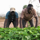 Jatropha nursery in Senegal