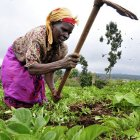 Kenyan farmer