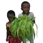 Children with napier grass