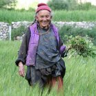 A Ladakh woman farming