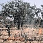 Trade-off: clearing trees to make way for cotton farming, Burkina Faso