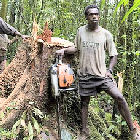 Logging in Papua New Guinea