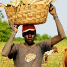 Malian farmer