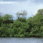 Mangrove forests can act as 'bioshields' against storms