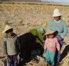 A Bolivian mother and her children harvesting quinoa