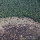 Kalimantan peatland deforestation