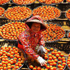 Taiwanese lady drying persimmon