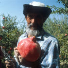 Farmer holding pomegranate