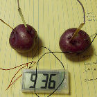 Potatoes being used to power an LED clock