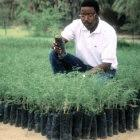 Tree nurseries like this one in Niger provide seedlings to stabilise soils