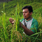 Rice researcher in Bolivia
